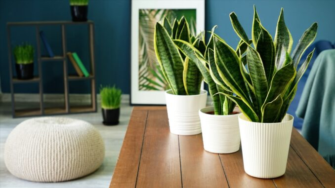 Some of the Best Plants for Your Home
